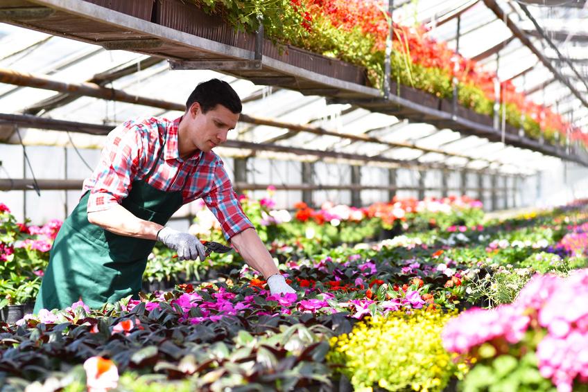 Ausbildung florist in beim top ausbilder for Ausbildungsberuf raumausstatter